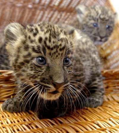 Image du Blog jade01.centerblog.net