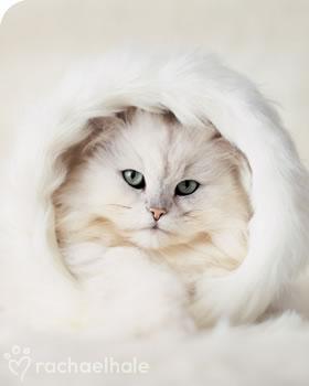 rachael hale: chat